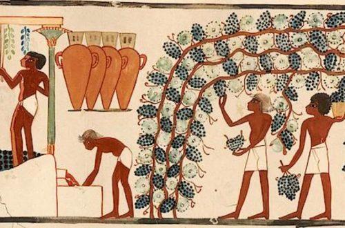 vino en Egipto